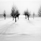 Landscape in snow by Robert Elfferich