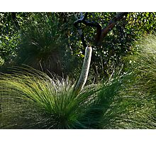 Grass Tree Flower Photographic Print