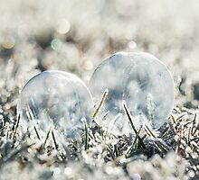 Double Bubble   by Nicole  Markmann Nelson