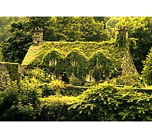 In the green (Llanrwst) Photographic Print