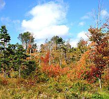 Early Autumn Scene by HALIFAXPHOTO