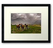 Three horses awaiting an approaching storm  Framed Print