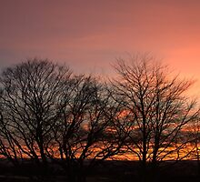 Sunset Through the Trees by Bill Lighterness
