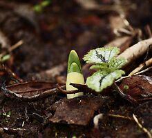 Life Starts Again by SirDidymus