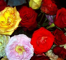 My Roses 9 by Mariam Muradian