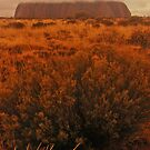 uluru in australia by mickeyb