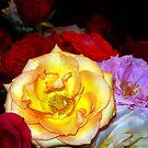 My Roses 14 by Mariam Muradian