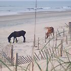 Horses in the Sand by Butterfly2008
