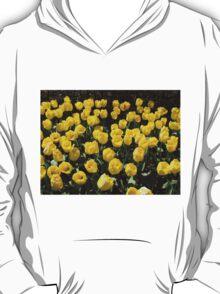Golden Dreams - Tulips in the Keukenhof Gardens T-Shirt