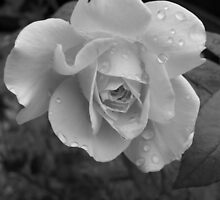 Rainy Day Rose by hellion