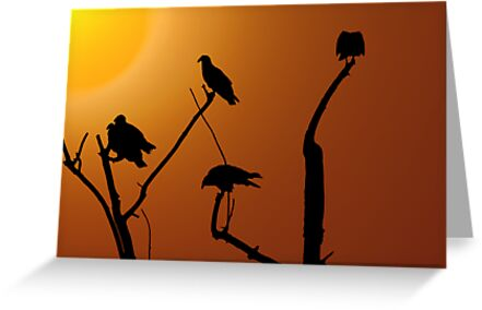 Vulture Roost by CarolM