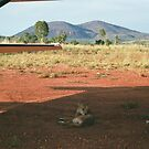Dingo in the shade of Aircraft wing, Mt Hart Homestead by Tara-Jane  Rogers