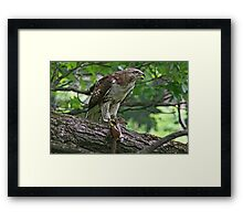 Guess Who's Coming To Dinner? Framed Print
