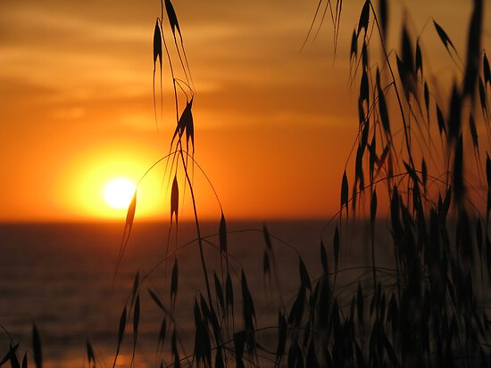 Summer Sunset by Gloria Abbey