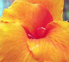 Yellow/Red Canna in bloom by Bill Perry