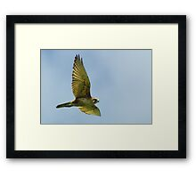 Brown Falcon from the Silver Falcon 3 Framed Print