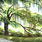 Live Oak by LinFrye
