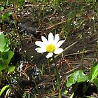 Colorado Pond Flower by Jeralynn