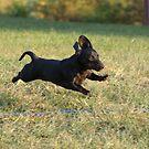 Weeee ... I'm Flying! by Lori Walton