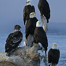 STOCK ~ Amongst Friends ~ Homer, Alaska by Rick & Deb Larson