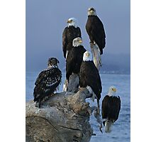 STOCK ~ Amongst Friends ~ Homer, Alaska Photographic Print