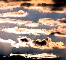 Joy Comes In The Morning by Laurie Puglia