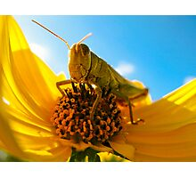 Am I Bugging You? Photographic Print