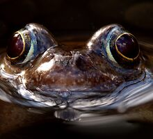 Common Frog by Roger Butterfield