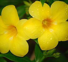 TROPICAL SHOWERS = BEAUTIFUL FLOWERS by Carol Barona