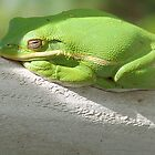 TREE FROG by onnibright