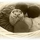 Balls in a Basket by BlackSwan
