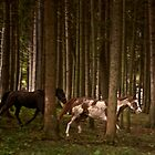 Two Horses in Woods by Mary Ann Reilly