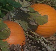 pumpkin Patch by Butterfly2008