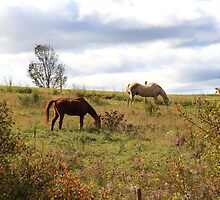 Horses In A Field by HALIFAXPHOTO
