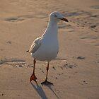 Beachwalker by brettspics