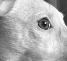 Thinking Puppy♡ Sticker