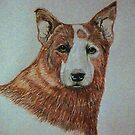 Red..A Red Heeler by Susan Bergstrom