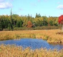 Autumn Marsh by HALIFAXPHOTO