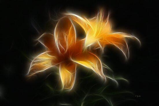 Fractal Lilies by Teresa Zieba