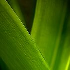 Green macro shot of leaves by GayeL Art