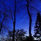 Blue sky.  by ccrcats