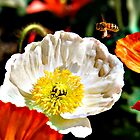 Busy bee at Floriade by discoden