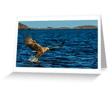 The White Tailed Eagle Greeting Card