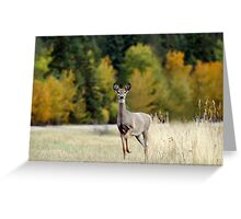 Saskatchewan Doe - Deer Greeting Card