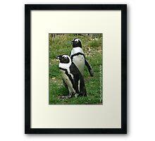 #586  Two Penguins Framed Print