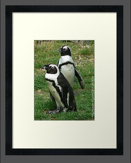 #586  Two Penguins by MyInnereyeMike