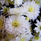 Chrysanthemums by Dmarie Frankulin