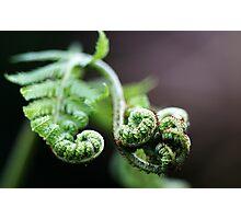 Koru Photographic Print