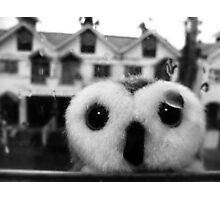 In Need Of Shelter Photographic Print