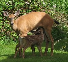 MOMMY FEEDING THE BABY DEER by MsLiz